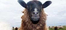 EUs Lissabonfördrag: Djur ska behandlas som kännande varelser